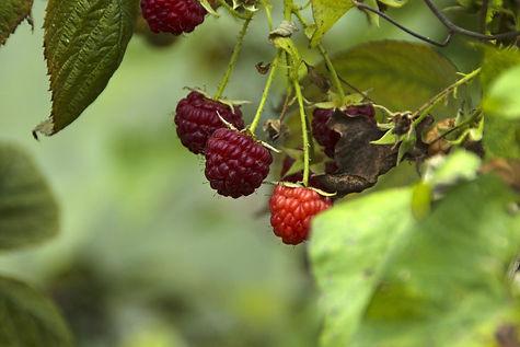 fruit-3229168_1920.jpg