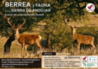 Berrea Sierra de Andújar