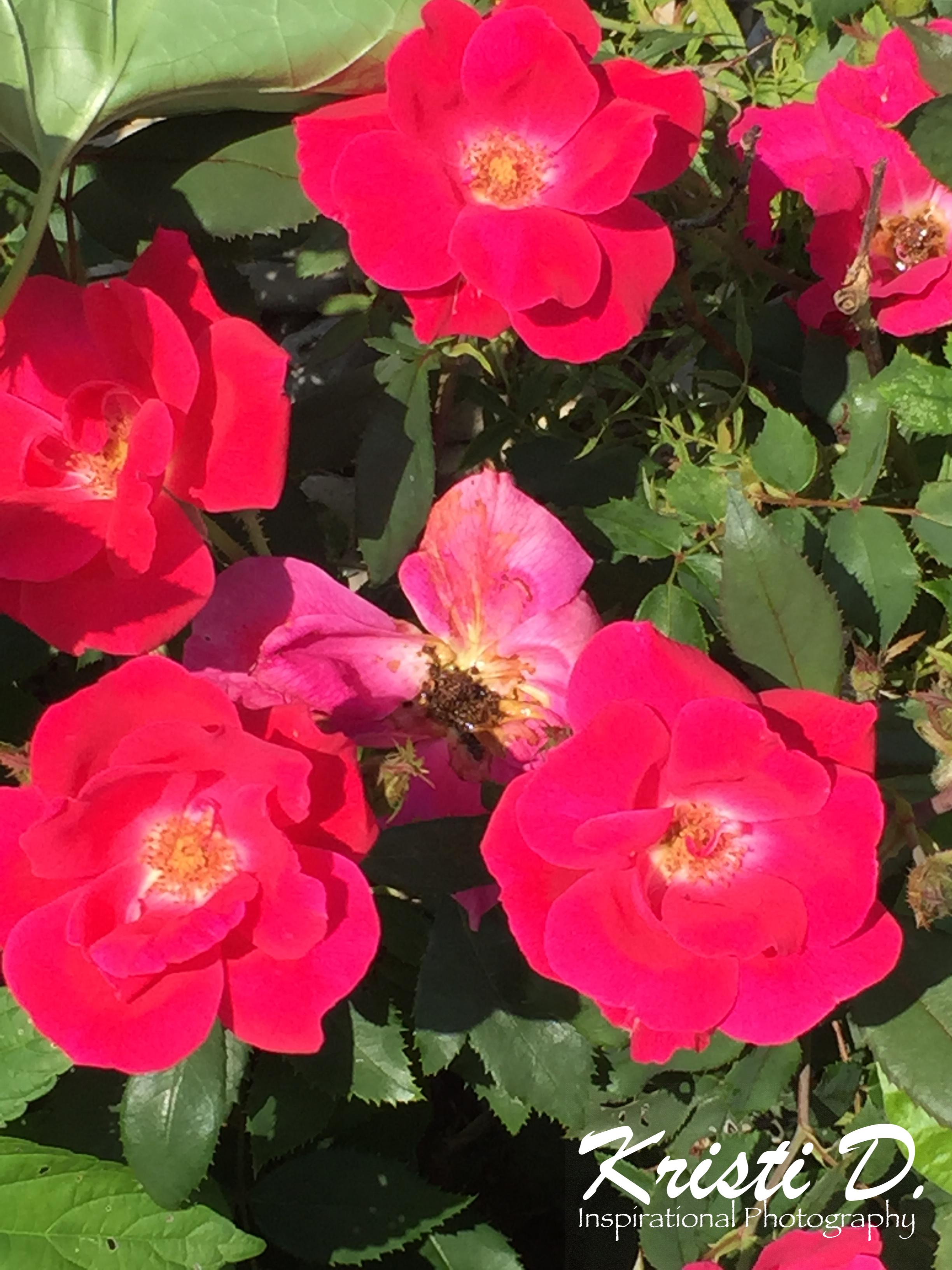 Flower #29