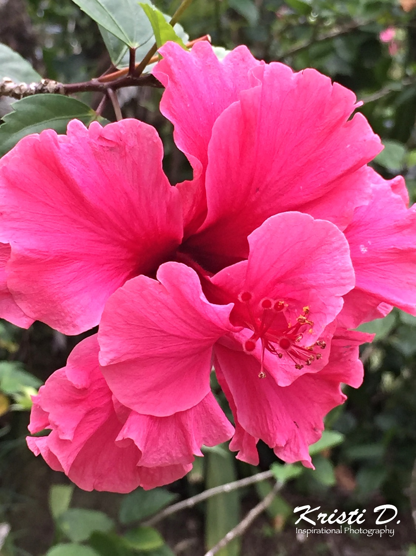 Flower #043