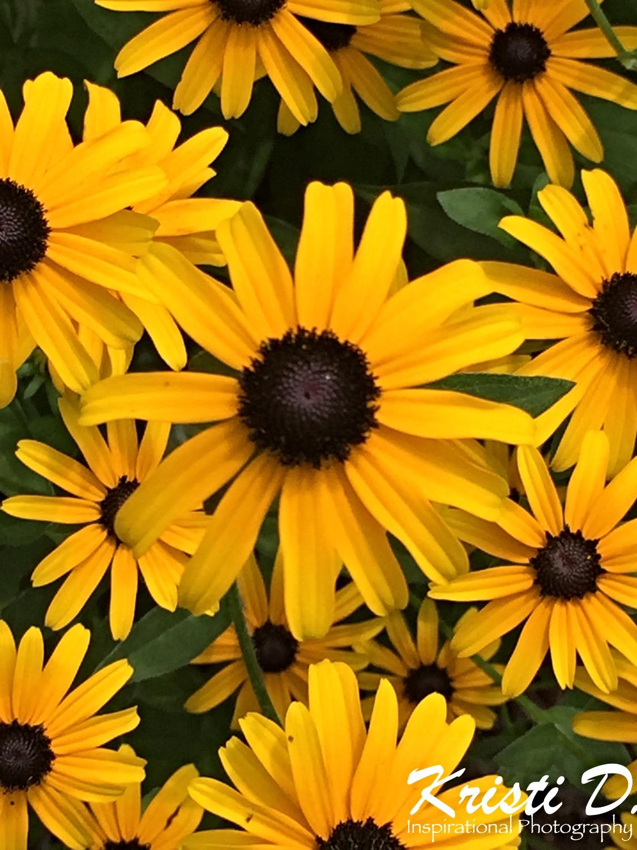 Flower #07