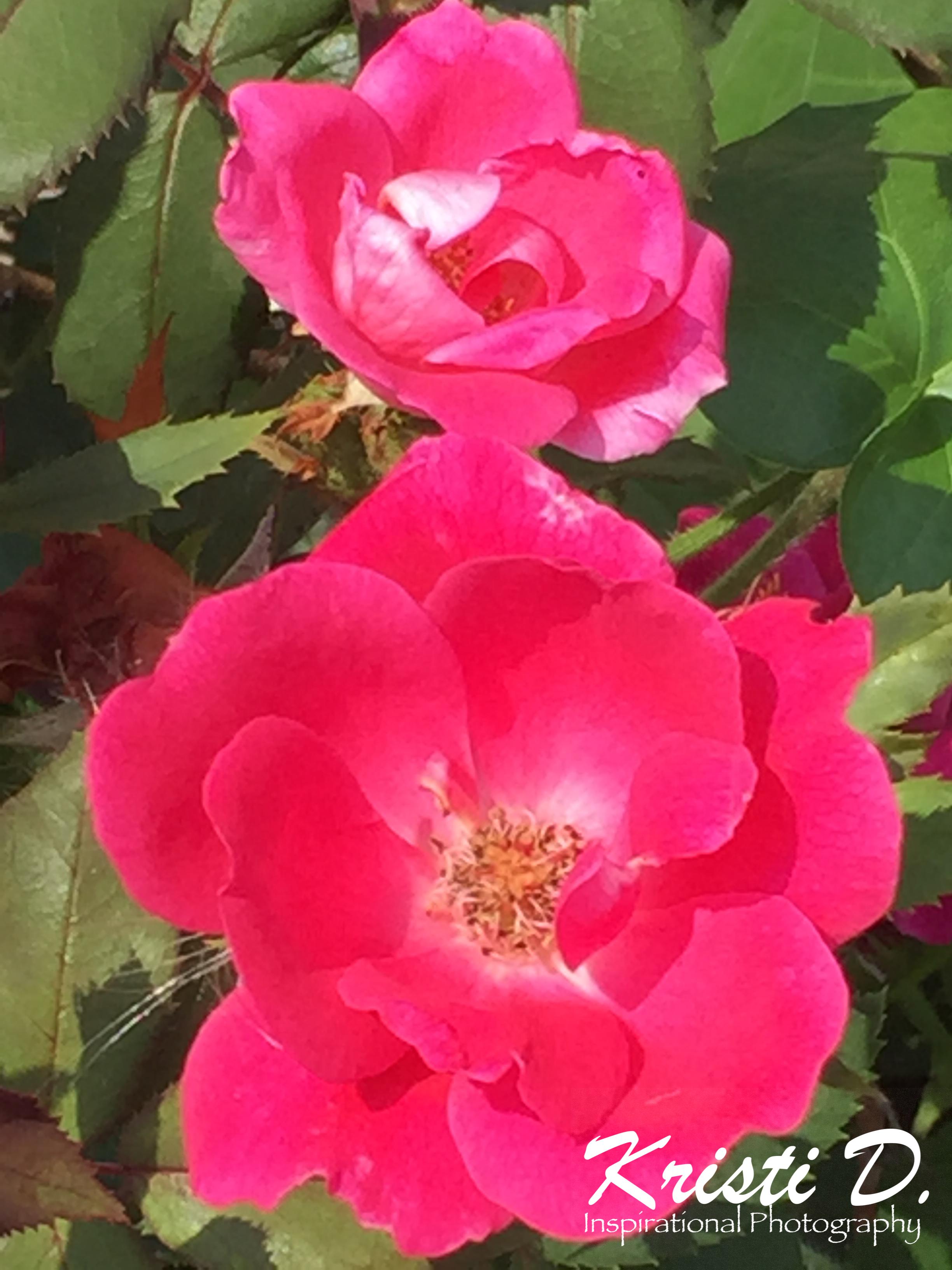 Flower #27