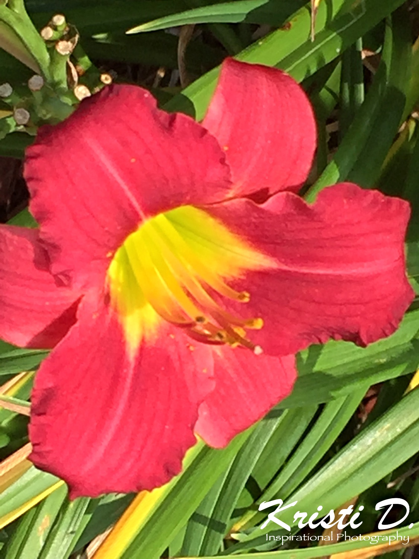 Flower #01