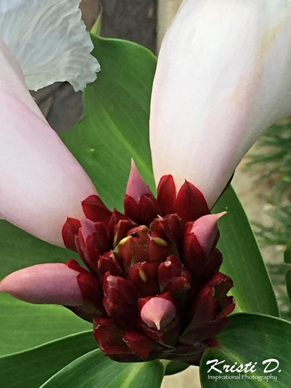 Flower #029