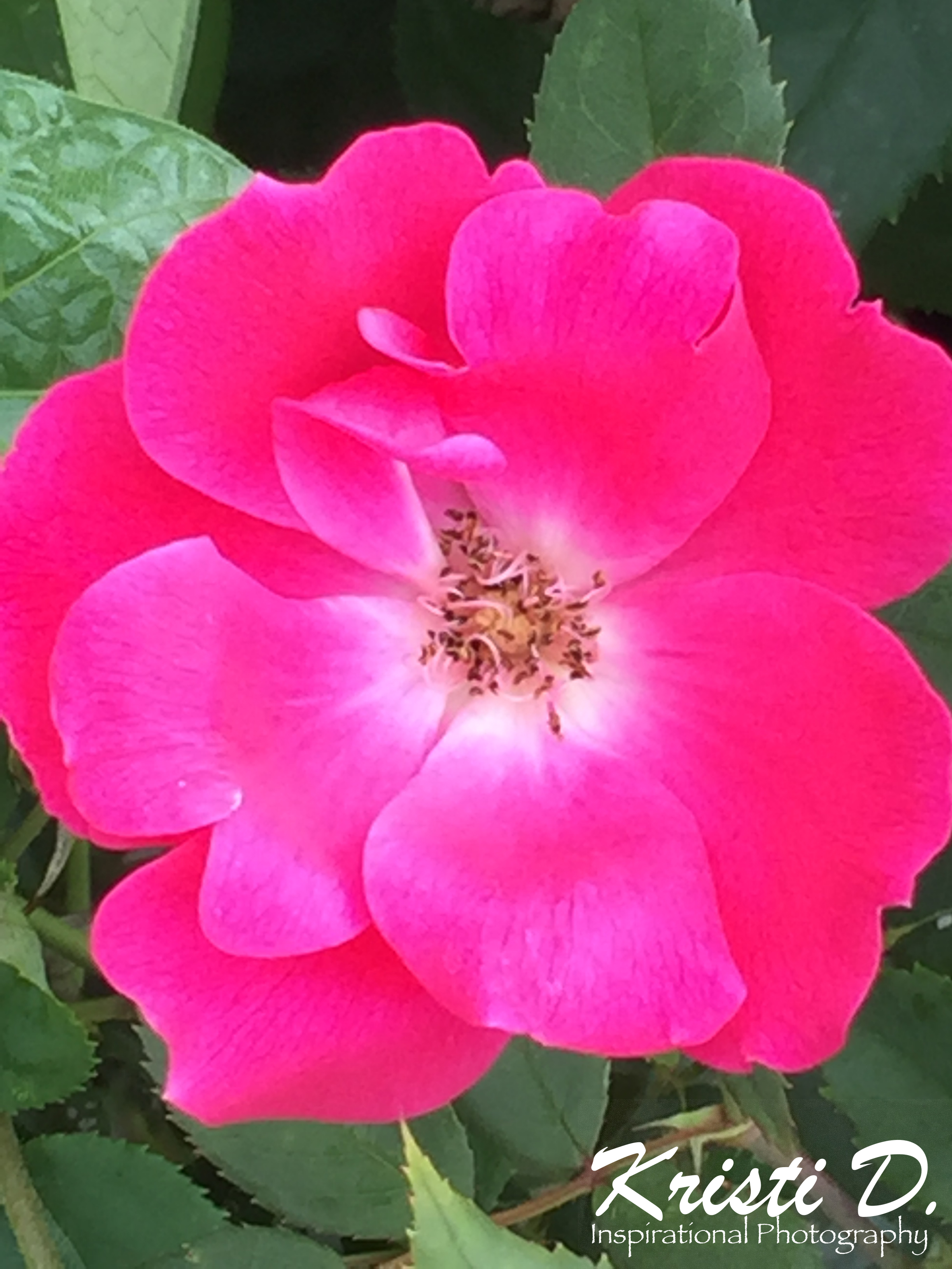 Flower #24