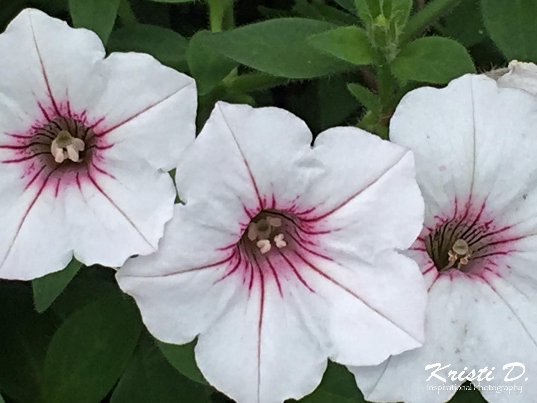 Flower 43