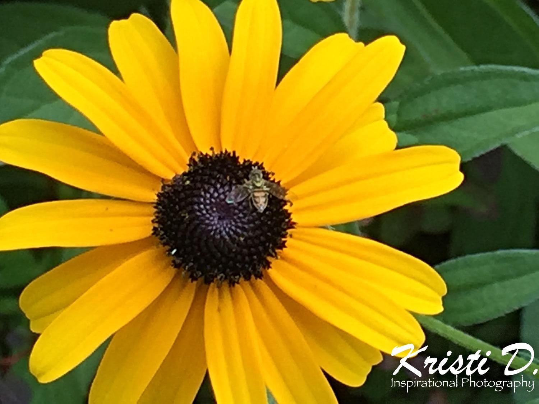 Flower #17