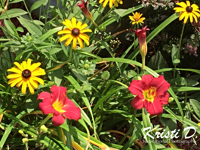 Flower #04
