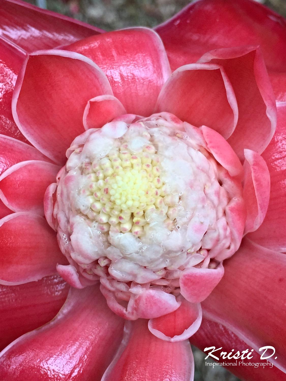 Flower #027