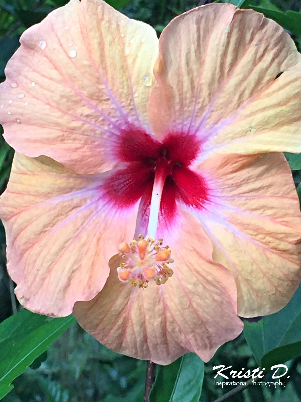 Flower #037