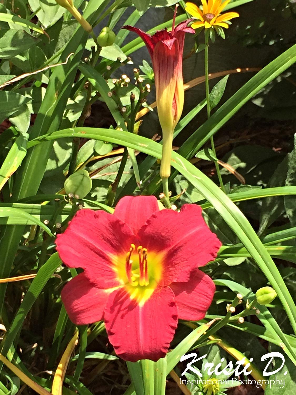 Flower #03