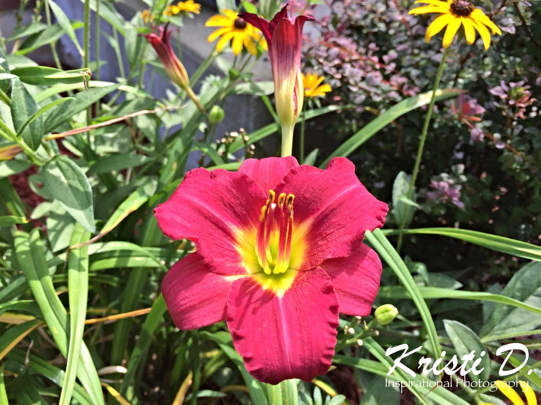 Flower #02