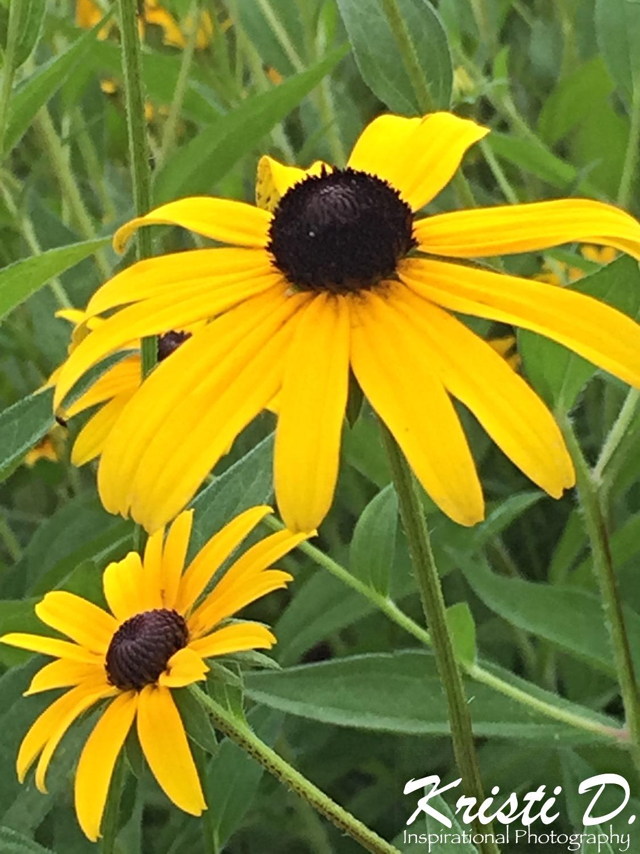 Flower #08