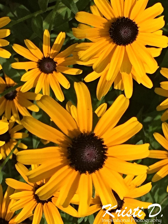 Flower #09