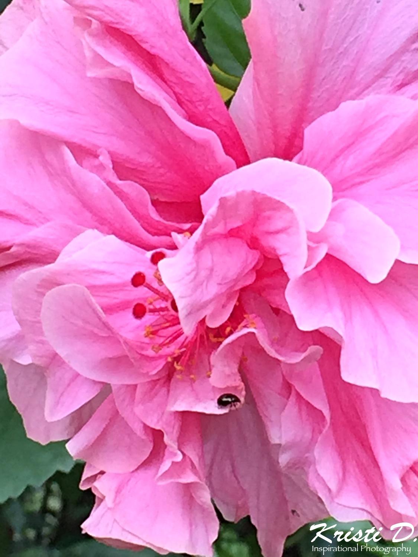 Flower #044
