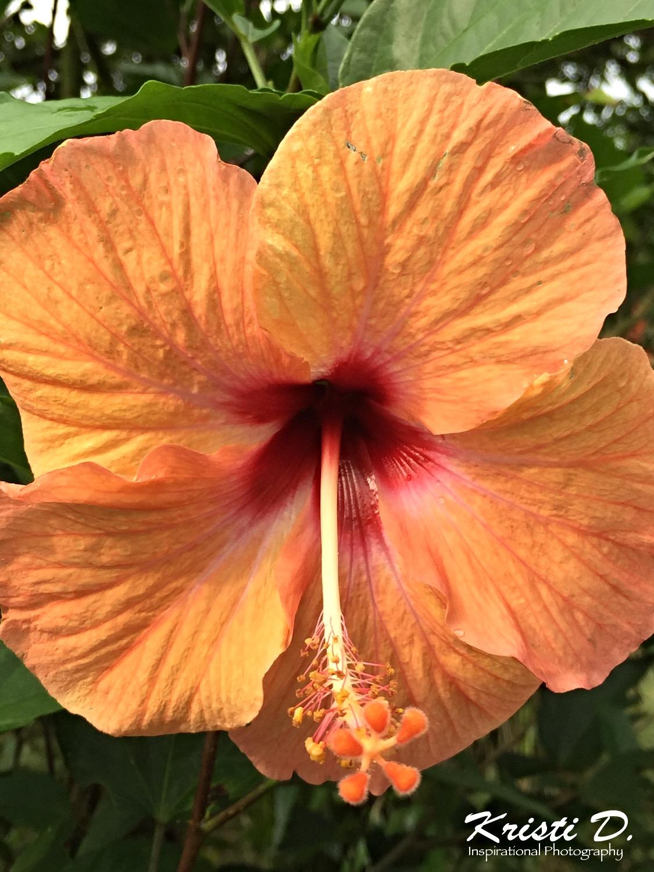 Flower #042