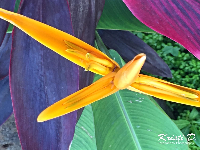 Flower #012