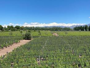 Bodega Renacer en camino para certificar sus viñedos como orgánicos.