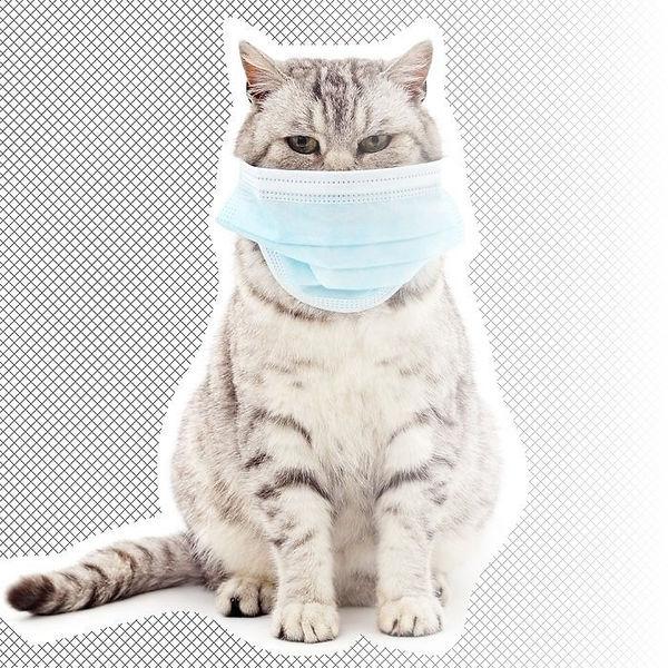 cat-coronavirus.jpg