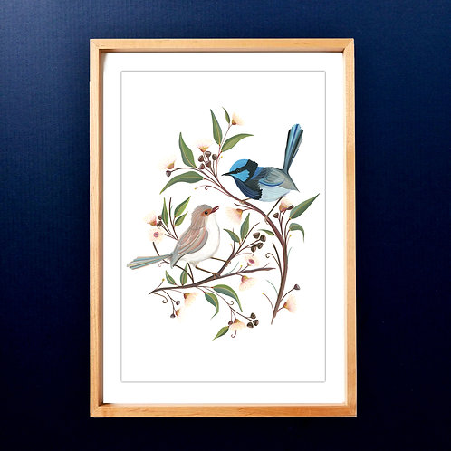 Limited edition Superb Fairy Wren Couple A3 Art Print
