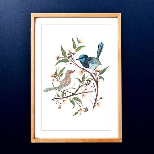 Limited edition Superb Fairy Wren Couple A3 Art Print