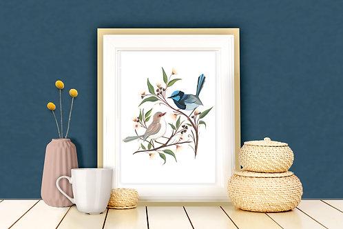 Superb Fairy Wren Couple Art Print