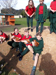 School Chickens