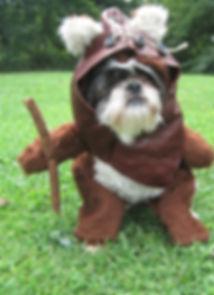 star wars dog.jpg