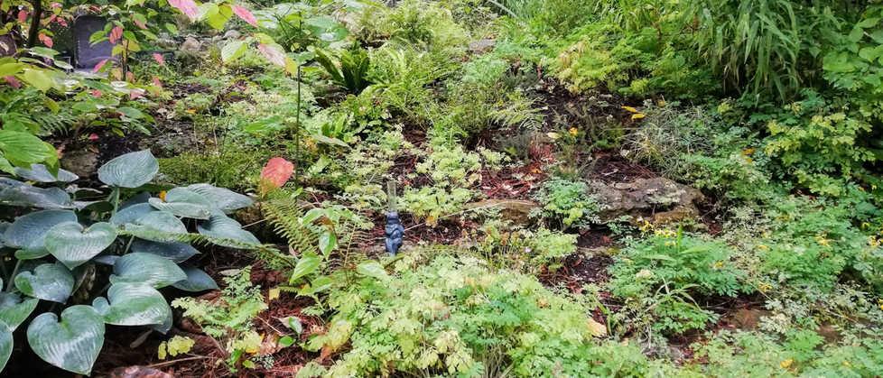 Hues of a green fern garden