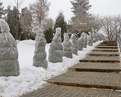 To Wrap or Not to Wrap - Preparing Trees for Long Winters