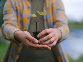 The 'danger' of guaranteeing newly planted trees