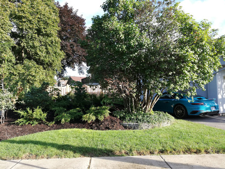 Reasons to Have a Group of Trees as Part of our Small City Gardens
