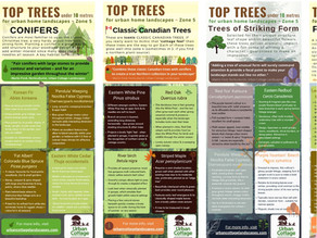 SERIES: TOP TREES for Urban Home Landscapes