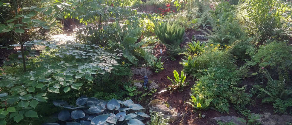 Backyard fern garden