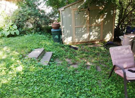 Backyard near shed.jpg