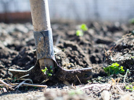 Why creating veggie gardens near trees in cities is a problem