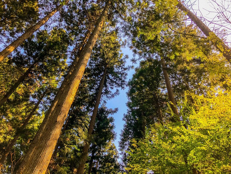 Coping in uncertain times: A walk in the woods can help
