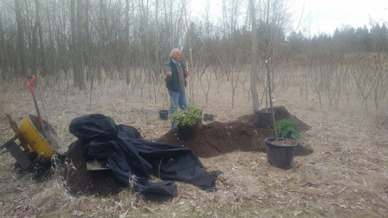 Guelph Arboretum Spring Installation 2018
