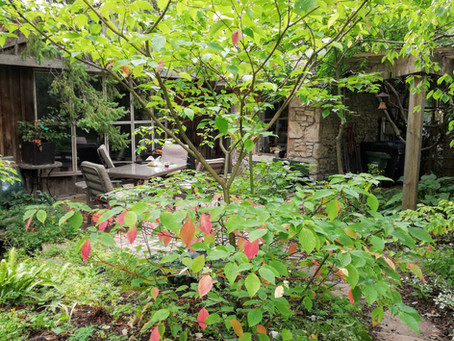 Fall: The Season For Planting Trees