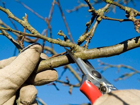 Pruning - Its Mysteries and Pleasures