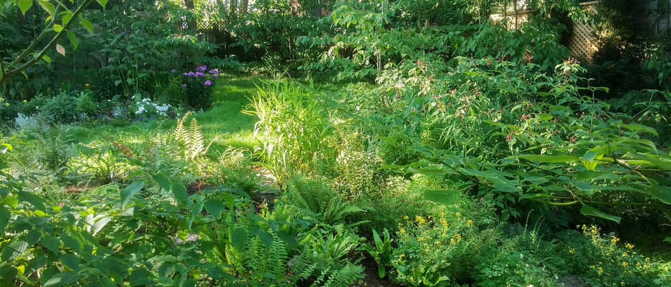 Side view of fern garden in late afternoon dappled light.