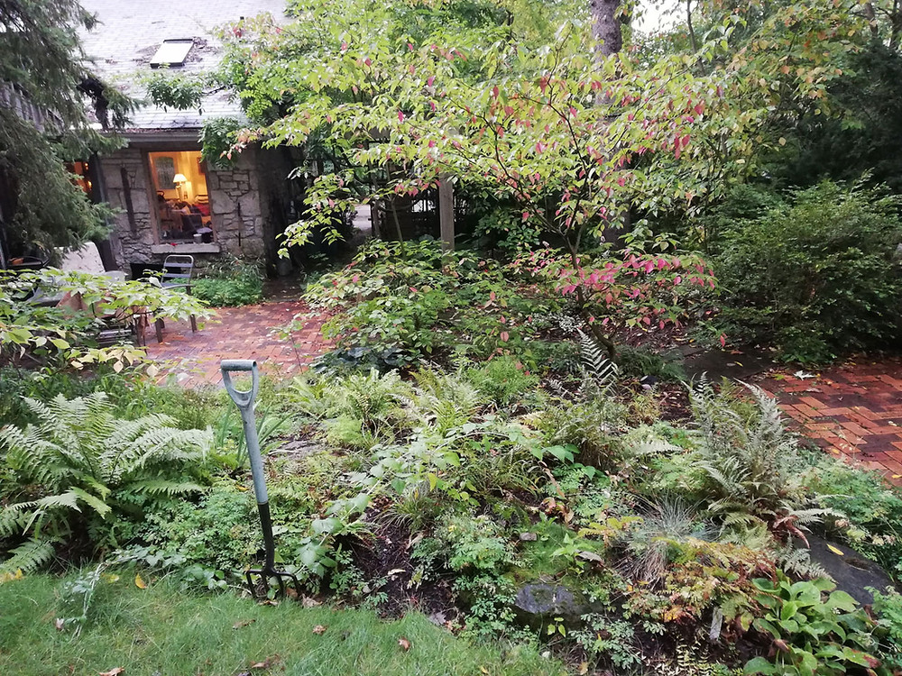 Guelph Residential Woodland