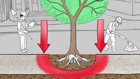 How to Plant City Trees for Optimal Health and Longevity