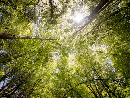 Trees Connect Us All ~ Top 20 Benefits of Trees