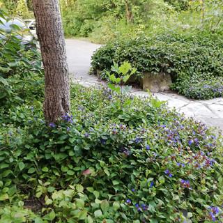 Planting-beds-between-stone-pathway-.jpg