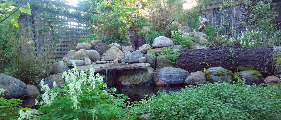 Backyard stone pond with trickling water