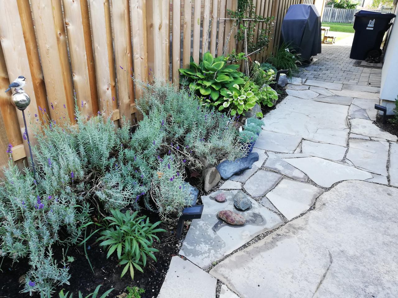 Garden landscape by patio