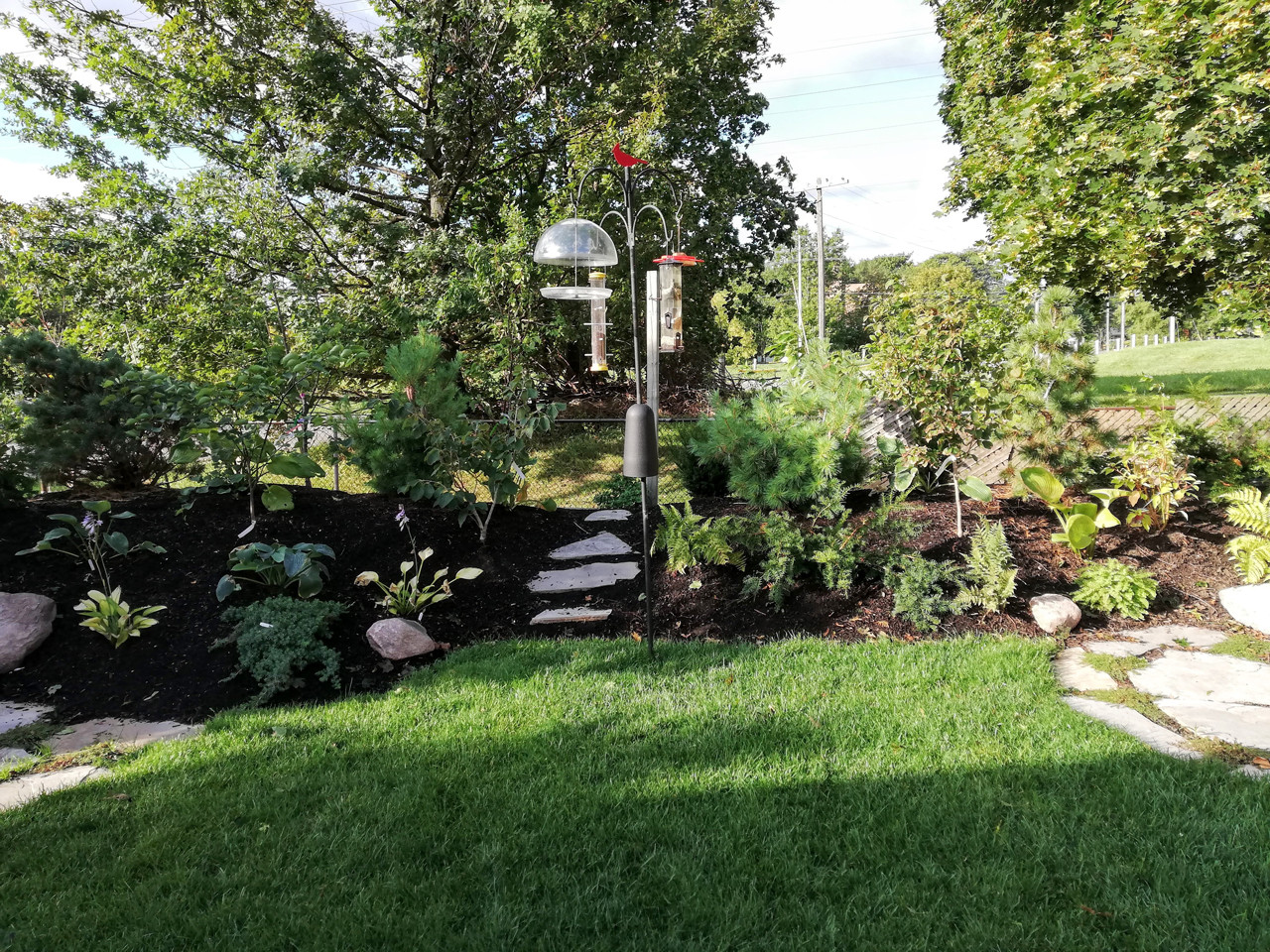 Backyard Pocket Woodlands