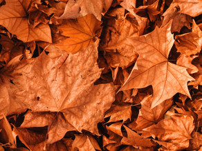 Fallen leaves are solid gold