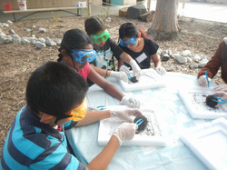 0621 dissection 2014.jpg